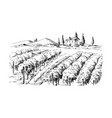 rows of vineyard grape plants and castle vector image vector image
