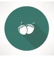 acorn icon vector image