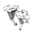 hand drawn chanterelle mushrooms vector image vector image