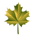 maple leaf vector image vector image