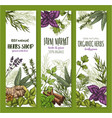herb and spice natural food sketch banner set vector image vector image