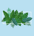 leaves and plants frame vector image vector image