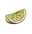 sketch of lemon vector image vector image