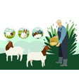 farmer and goats flat countryside vector image vector image