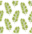 watercolor seamless pattern with acacia leaves vector image vector image