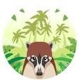 coati on jungle background vector image vector image