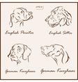 dog pets vector image vector image