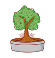 potted tree bonsai japanese decoration isolated vector image