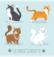 cat breed silhouette vector image