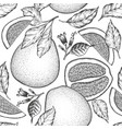 hand drawn sketch style pomelo seamless pattern vector image vector image
