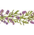 lavender plant pattern vector image