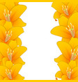 orange lily border vector image