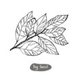 bay laurel or laurus nobilis vintage engraved vector image