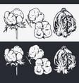 botanical set cotton flowers vector image