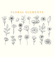 floral elements set botanical drawings vector image