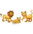 Lion family with cute little cub vector image vector image