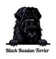 peeking dog - black russian terrier - dog breed vector image vector image