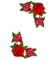 red roses with leaves isolated on a white vector image vector image