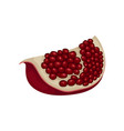 slice of ripe pomegranate red fruit with juicy vector image vector image
