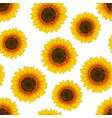 orange yellow sunflower seamless on white vector image vector image