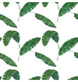 seamless pattern with tropical banana leaves vector image