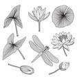 flora reservoir water plants in black vector image