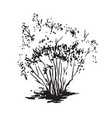 hand-drawn bush black and white realistic image vector image
