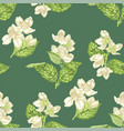 jasmine flowers seamless pattern in realistic vector image