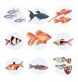 popular aquarium fishes part 1 vector image vector image