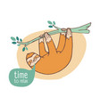 funny happy sloth hanging from branch cute lazy vector image vector image