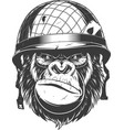 gorilla in the military helmet vector image vector image