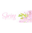 soft flower spring background cherry blossom vector image vector image
