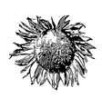 Sunflower silhouette vector image vector image