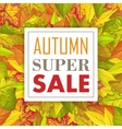 Autumn Super Sale Banner Fall Background vector image vector image