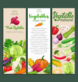banners vegetables vector image vector image