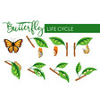 insect butterfly life cycle larva transformation vector image
