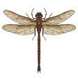 realistic dragonfly close up top view vector image