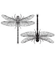 black and white realistic dragonflys close up vector image