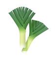 onion leek ripe green vector image vector image