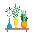 wooden shelf with decorative potted plants vector image vector image