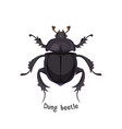 black dung beetle that has strong unpleasant smell vector image