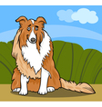 collie purebred dog cartoon vector image