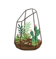 hand drawn terrarium with succulents and cactuses vector image vector image