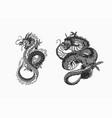 japanese dragon mythological animal or asian vector image vector image