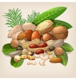 Nut collection with raw food mix vector image