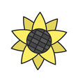 sunflower head color icon vector image vector image