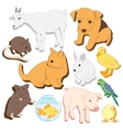 Animals pets colorful icons set vector image