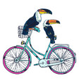 bike toucan super summer vector image vector image