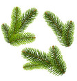 fir tree isolated isolated background vector image vector image