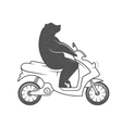 Funny Bear vector image vector image